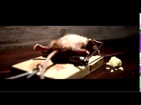 ►Un rat pas comme les autres [humour]►HD YoutuberZzZ