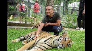 Tiger জগৎ খ্যাত রয়েল বেঙ্গল টাইগার ঘুমালেও আক্রমনে সেরা ... না দেখলে মিস।