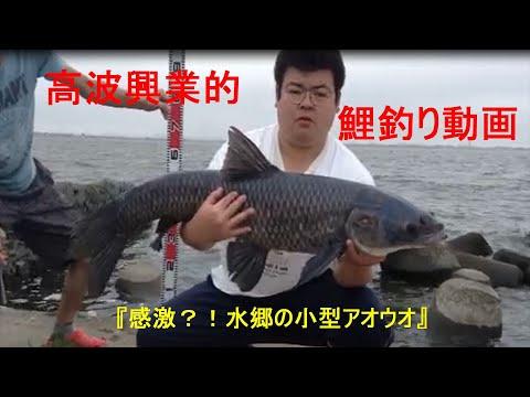 takanamiemotion さんのチャンネル 高波興業的鯉釣り動画 Vo.13 『アオウオの