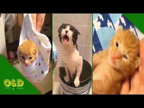 Too Cute Baby Animals - Cute Baby Animals Funny Videos July 2019 Compilation - Try Not to Laugh Cat