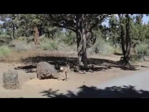 Deer  Mov