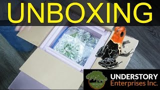 Huge Dart Frog Unboxing!! (Understory Enterprises)