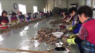 Cuộc sống ở Hàn Quốc: Cạy hàu,Công việc kiếm hơn 1000 đô mỗi tháng cho chị em.굴까기