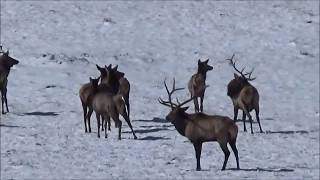 The Most INSANE Elk Hunt Ever! (MUST WATCH)