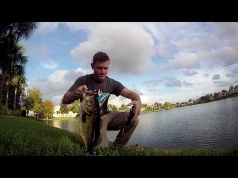 28 Pounds of Bass Fishing from the Bank!