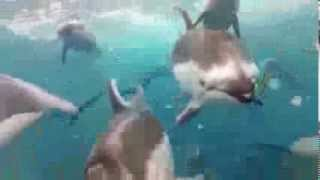 DiegoMolinams - Dolphinz (Original Mix) [Music Video]