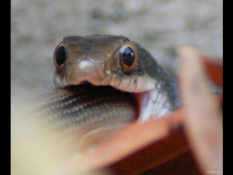 Змея попала на крючок
