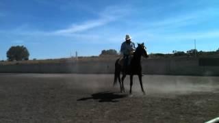 video yegua colorada