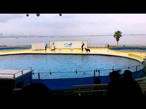 Marine World - Dolphin Show (Part 3/4)