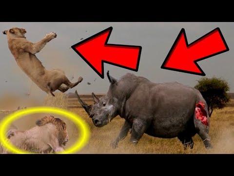 САМЫЕ ЭПИЧНЫЕ БИТВЫ ЖИВОТНЫХ в 2017 году/The MOST EPIC FIGHTS ANIMAL in 2017