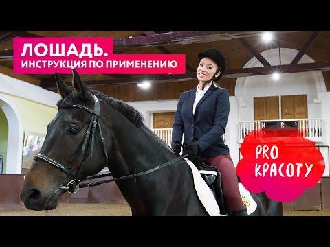 ProКрасоту — Лошадь. Инструкция по применению