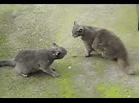cat-fight.html