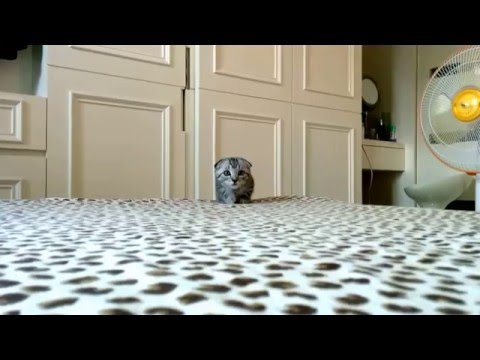 迫りくる、猫。