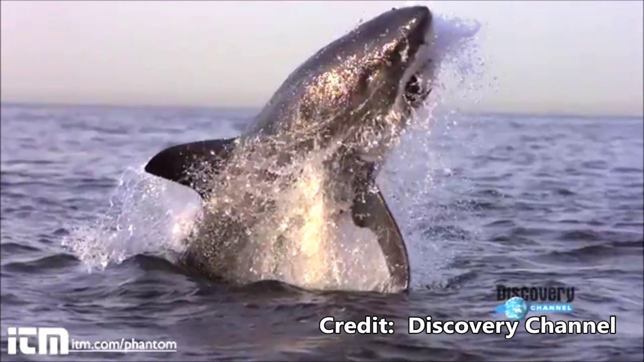 Shark  amp  Lion Attacks on World s Greatest Animals