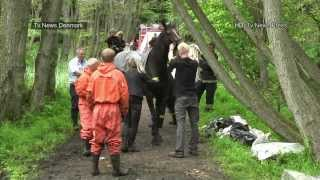 Horse Accident  (TV News Press)