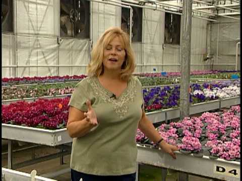 Optimara Nashville African Violet Production Facility