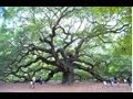[Angel Oak] Video