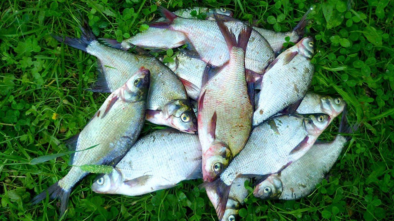 Рыбалка мирной рыбы весной