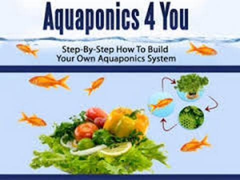 Aquaponics Systems   Hydroponics Systems   Learn To Build Your Own Aquaponics Or Hydroponics System