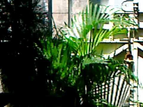 Como tener tu jardin en casas peque as youtube for Jardines de casas pequenas