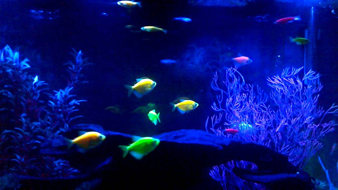 New 29 gal glo fish tank 6 18 2013 youtube for Glow in the dark fish tank