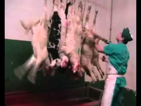 Matadero de corderos