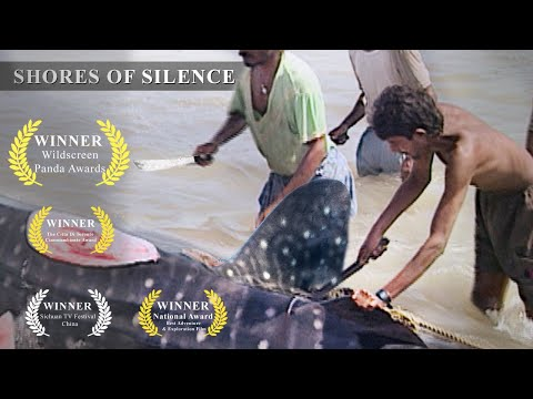 Whale Shark Slaughter in India- Shores of Silence