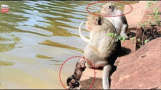 OMG Why Big monkey Push baby into water? Baby scaring/ MUM-baby Crying Youlike Monkey 1497