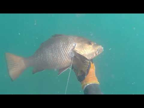 SPEARFISHING CAMBODIA , chasse sous marine cambodge