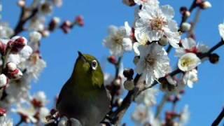 日本のいいところを再認識できる動画(他3本)