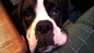 Vídeo 13 de Scratching Post