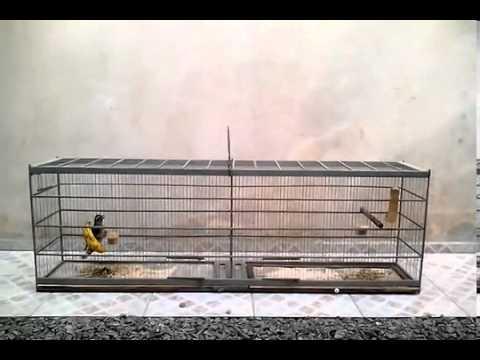 Trinca Ferro Rapido Combat video