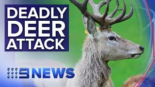 Man dead, woman fighting for life after deer attack in Victoria | Nine News Australia