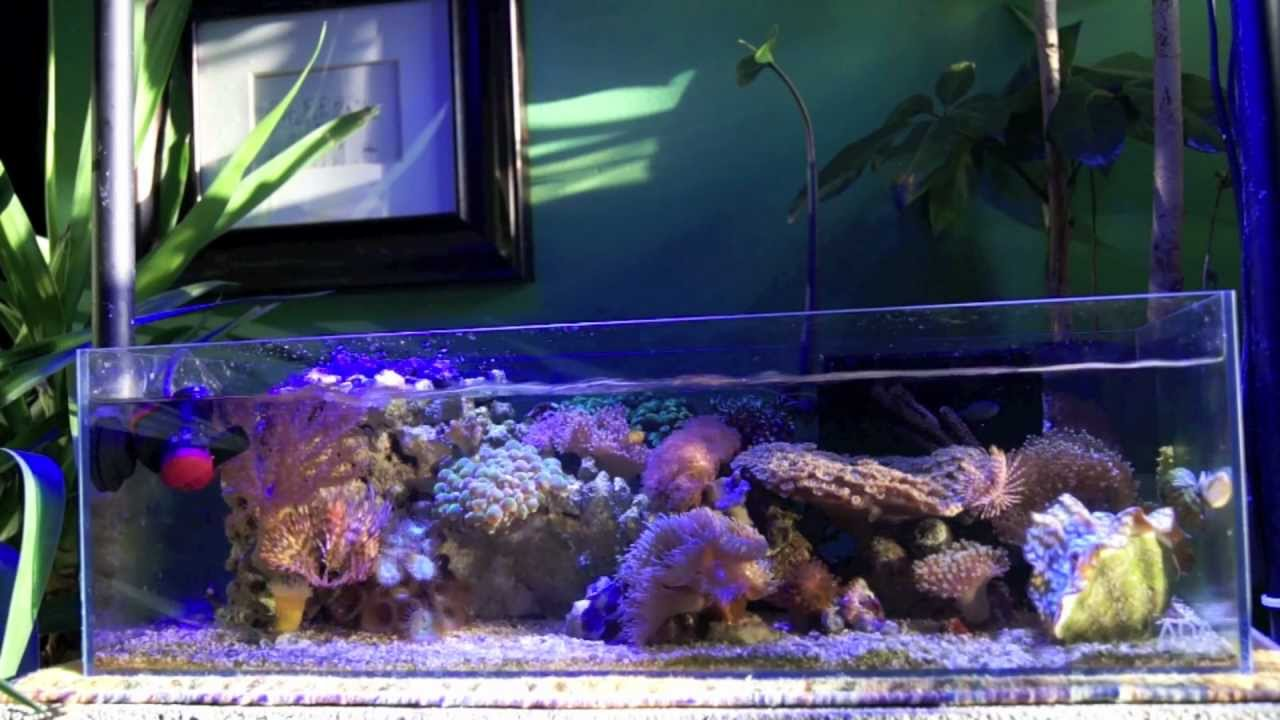 Shallow nano reef tank ada rimless youtube for Rimless fish tank