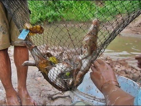 ไอ้โง่ดักปลาหน้าดินหลังฝนตกหนักในแม่น้ำใหญ่ประเทศลาว Thailand Fishing Net Go Inter Lao PDR