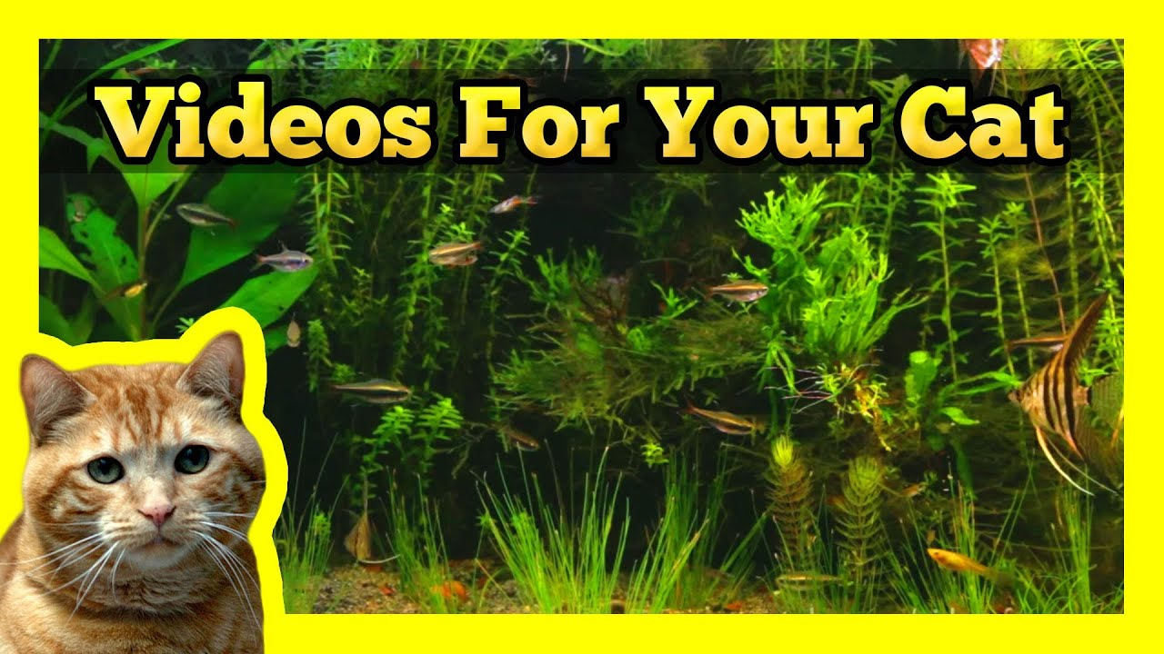 Videos for your cat longest aquarium fish tank video on for Fish videos for cats