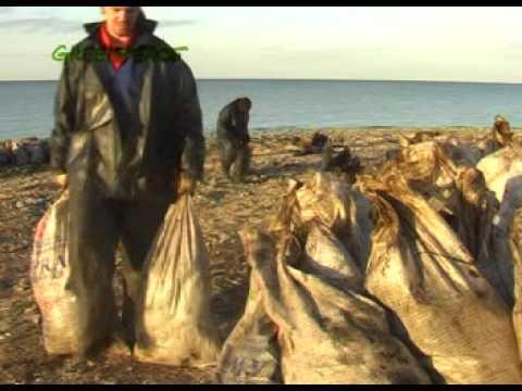 Greenpeace Video - Kerch