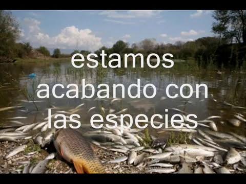 proteccion al medio ambiente