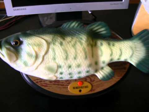 Big mouth billy bass jr singing fish youtube for Big mouth billy bass singing fish