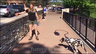Funny Pet Videos Animals FUNNY PET FAILS Compilation