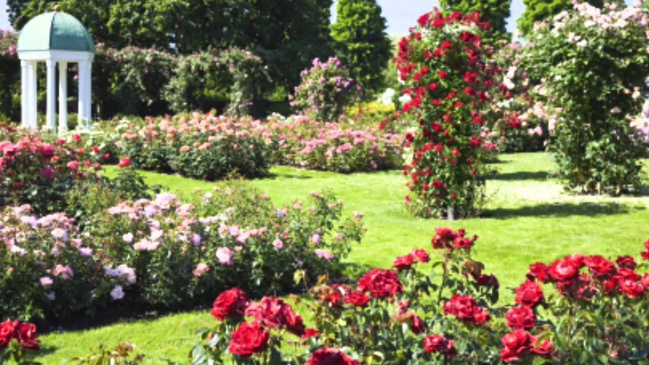 Дизайн для роз в саду