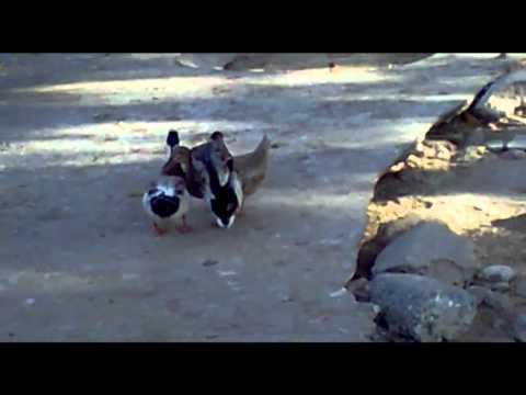 Lay Lay Maza Lay.mp4 video