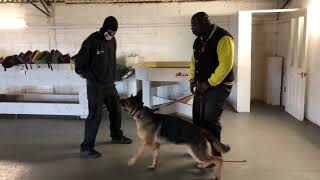 Stormzy & Max showline GSD Protection
