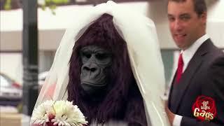 Đùa Chút Thôi Nước Ngoài Siêu Hài Hước   Part 21 Bridezilla No, just Gorilla Bride   YouTube
