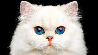 Más de 30 datos sobre gatos que prueba que son mejores que los humanos