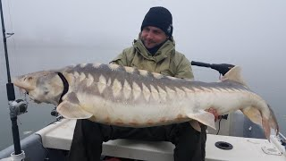 BIG STURGEON IN SPINNING - HD by CATFISH WORLD