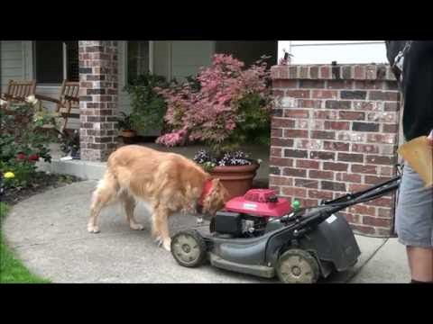 HOW TO FIX a HONDA LAWNMOWER that WILL NOT START - HRX217 - GCV 160, 190 . CLEAN the CARBURETOR BOWL