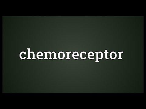 Header of chemoreceptor