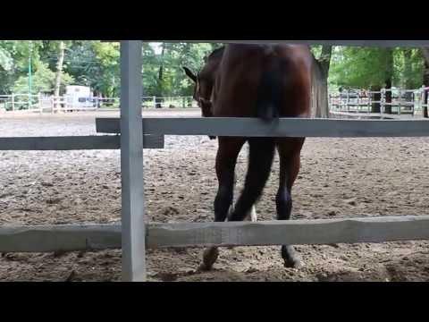 Лошадь чешет попу