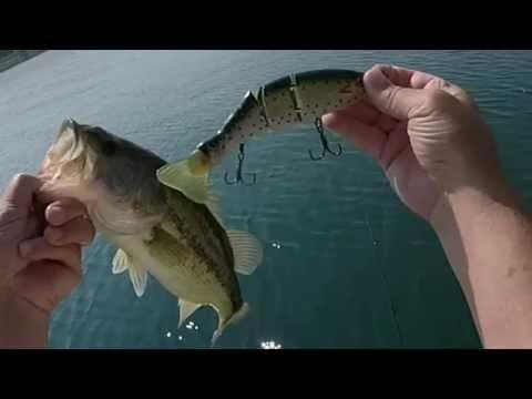 Bull Shoals Lake Arkansas 8 inch Triple Trout Swimbait  08-04-2114